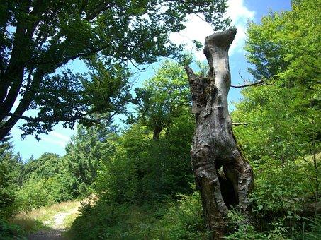 Log, Dead Plant, Arid, Animal Shape, Mythical Creatures