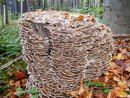 Mushroom, Spunk, Wood, Forest, Nature, Autumn