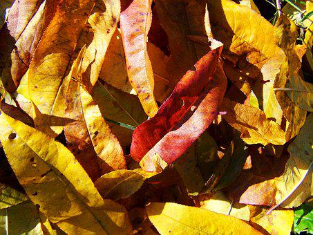 Fallen Colored Leaves, Autumn, Avar