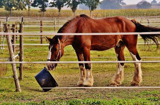 Shire Horse, Horse, Play, Bucket, Big Horse, Ride
