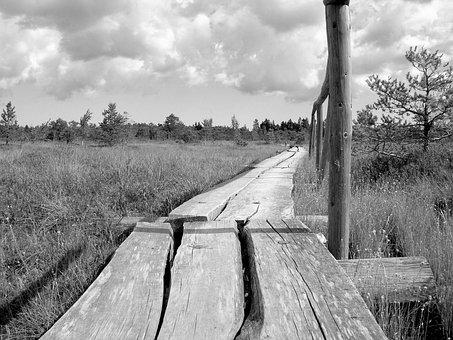 Latvia, In The Bog, Black And White, Karg, Mystical