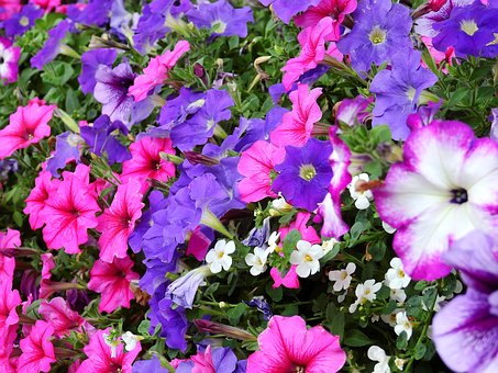 Flowers, Blossom, Bloom, Plant, Nature, Bloom, Pink