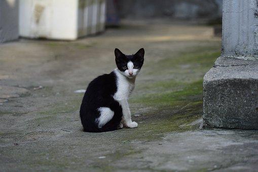 Cat, Gilnyangyi, Kitten, Meeting, The Black Cat