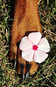Paw, Pads, Flower, Dog, Nice