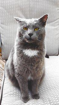 Cat, Feline, Grey, Gray, Animal, Whisker, Eye, Paw
