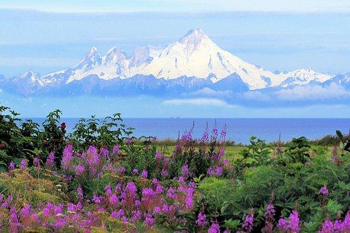 Alaska, Kenia, Mt Iliamna, Vocano, Fireweed, Summer