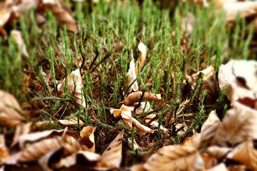 Moss, Avar, Autumn, Forest, Nature, Mood, Brown