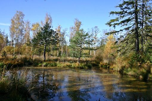Wetland, Lake, Pond, Forest, Nature, Landscape, Water