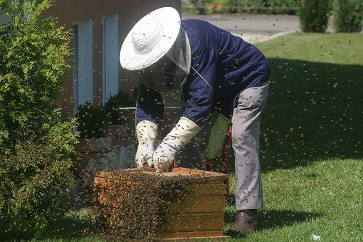 Beekeeper, Bees, Garden, Honey Bees, Bee Keeping
