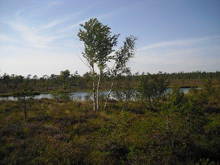 Moor, Moorland, Black Moor, Rhön, Hochrhoen, Vegetation