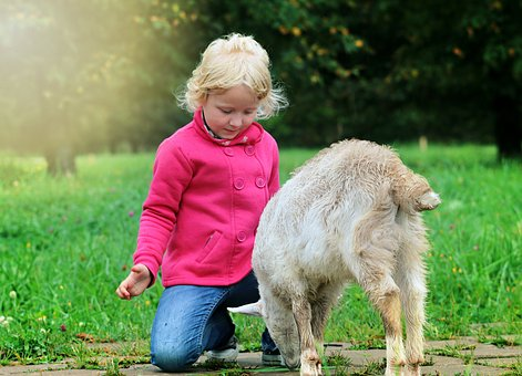 Baby, Goat, Blessing, Dialogue, Communication, Kindness