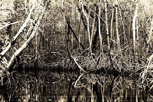 Bogs, Southern States, Black And White, Mangroves