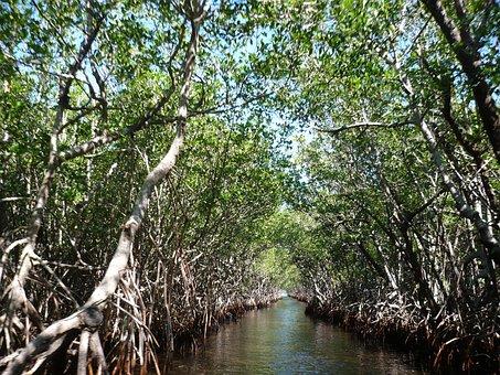Mangroves, Everglades, Bogs, Marsh
