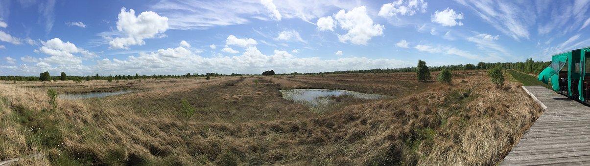 Moor, Landscape, Nature, Swamp, Nature Conservation