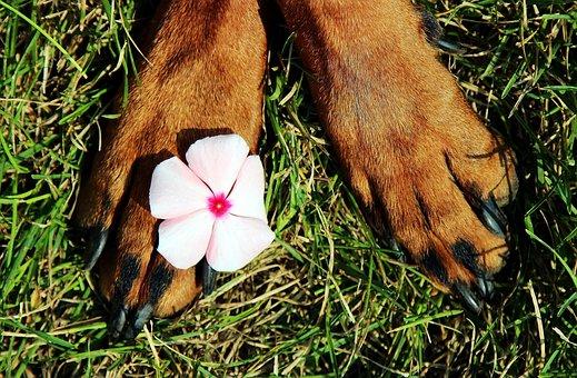 Paws, Pads, Flower, Dog, Nice