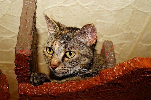 Pet, Cat, Cute Cat, Cat's Eyes, Paw, Curious, Mieze
