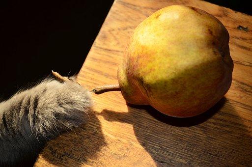 Food, Fruit, Pear, Tree, Cat, Paw, Krupnyj Plan