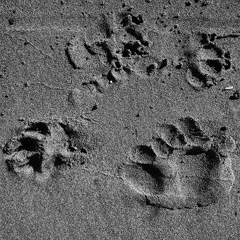 Paw, Prints, Beach, Sand, Black And White, Monochrome