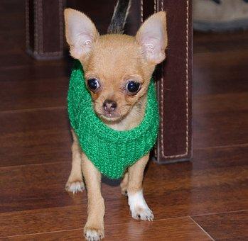 Pet, Puppy, Animal, Animals, Mammals, Cute, Profile Dog