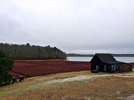 Cape Cod, Cranberry, Bog, Old House, Sea, Red
