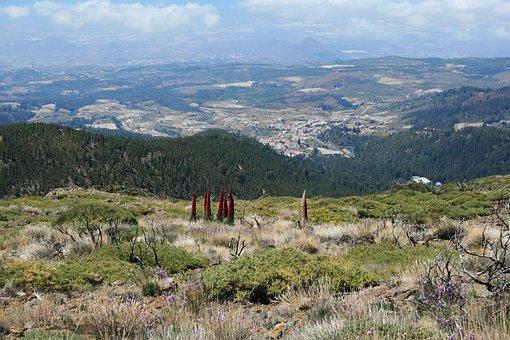 Canary Islands, Teide National Park, Tenerife, Spain