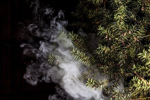 Smoke, Vape, Plant, English Yew, Yew, Vaporizer, Vaping