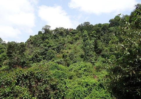 Forest, Evergreen, Sahyadri, Western Ghats, Mountains