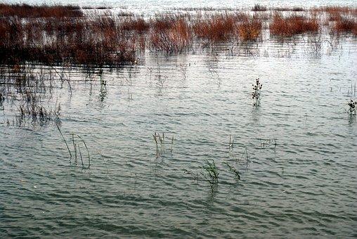 Wetlands, Wetland, Ecology, Nature, Marsh, Lowland, Bog