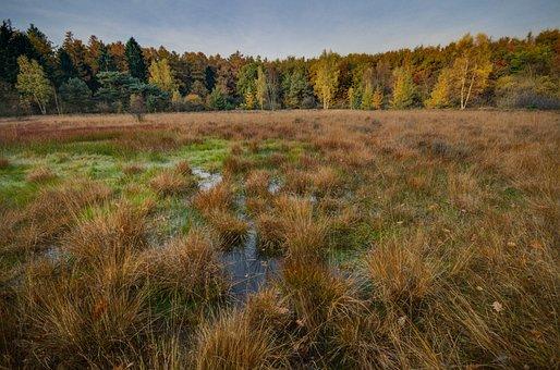Swamp, Autumn, Fall, Wet, Wetlands, Nature, Green
