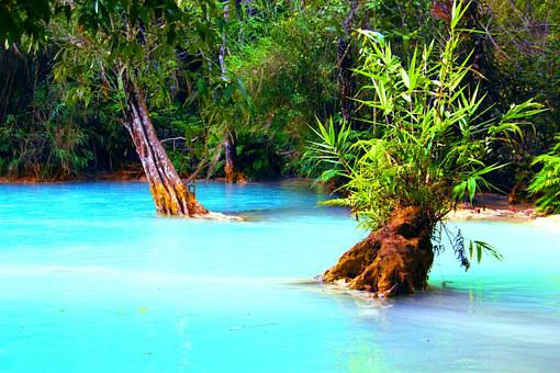 Jungle, Lake, Swamp, Forest, Wilderness, Pond, Water