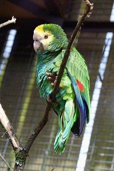 Bird, Parrot, Animal, Wildlife, Feather, Nature