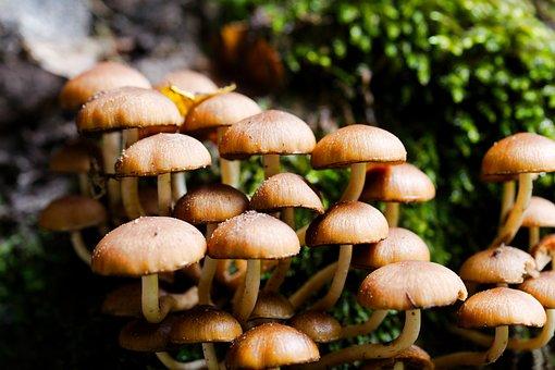 Mushroom, Rac, Toadstool, Autumn, Cap, Spore, Nature