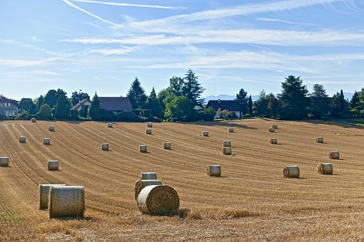 Harvest, Bales, Hay, Agriculture, Farm, Field