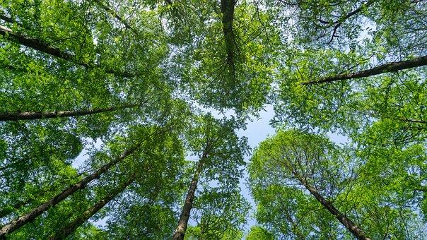Tree, Nature, Wood, Leaf, Branch, Look Up, Park, Spring