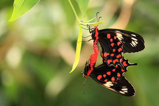 Butterfly, Insect, Nature, Wing, Outdoors, Summer, Leaf