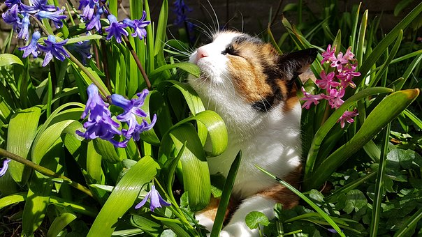Cats, Spring, Nature, Cat, Pet, Plant, Hyacinth, Summer