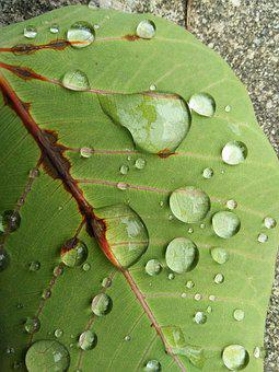 Leaf, Rain, Drop, Flora, Dew, Nature