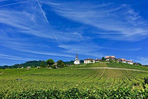 Farmland, Agriculture, Nature, Landscape, Sky, Field