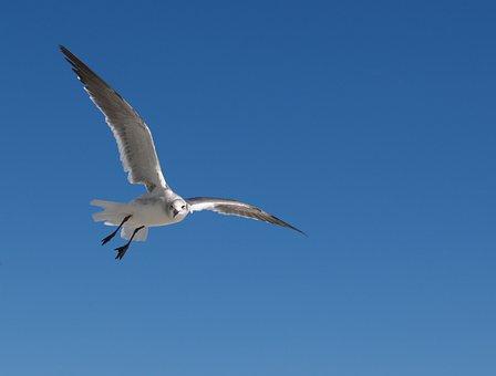 Bird, Wildlife, Nature, Flight, Outdoors, Sky, Feather