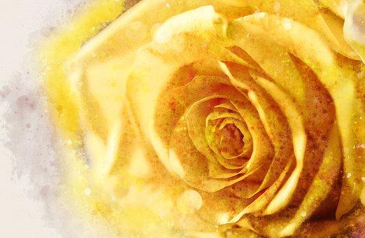 Rose, Flower, Anniversary, Romance, Gift, Petal