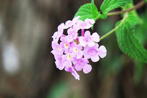 Nature, Flower, Plant, Leaf, Outdoor, Kinds Of Food