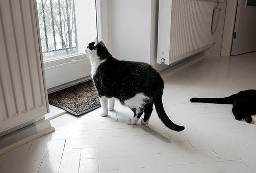 Indoors, Window, Cat, Sad, Alone, Home, Interior, Room
