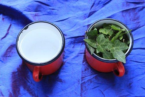 Ivy, Poison, Drink, Green, Nature, Plant, Leaf