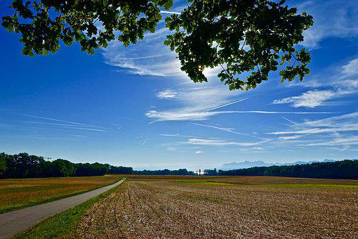 Scenery, Agriculture, Nature, Tree, Field, Landscape