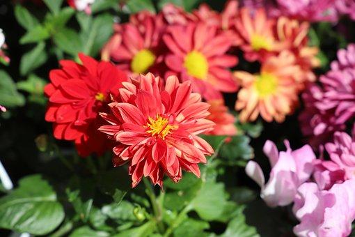 Flower, Nature, Plant, Garden, Summer, Petal, Floral