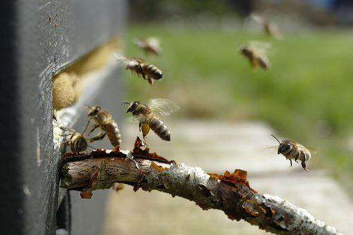 Bee, Beehive, Pollen, Insect, Nature, Animal World
