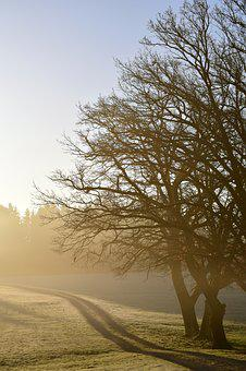 Tree, Nature, Landscape, Dawn, Haze, Sunrise, Glade