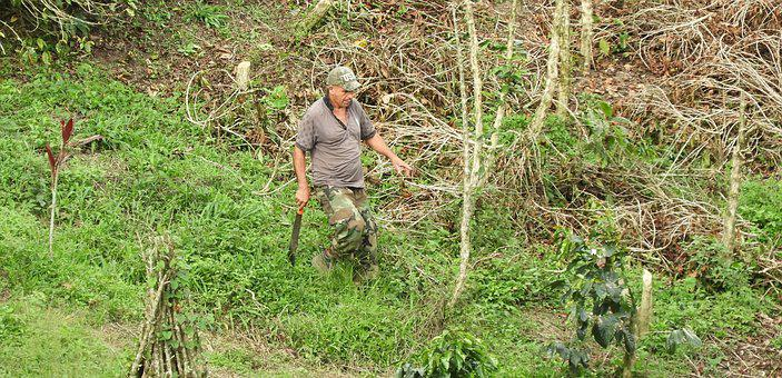 Nature, Plant, Outdoors, Peasant, Worker