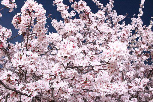 Spring Flowers, Beautiful, Pink, Pink Flower