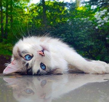 Nature, Animal, Portrait, Mammal, Cute, Beautiful